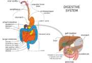 Digestion and Malabsorption